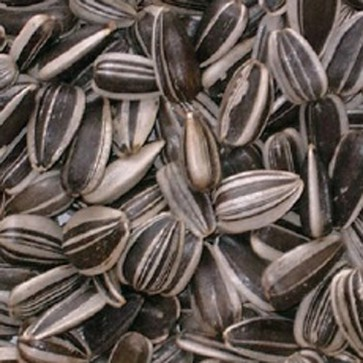 Striped Sunflower Seeds 10kg