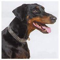 Dogs Collars