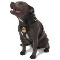 Bull Terrier Collars