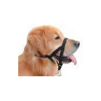 Muzzles & Harnessess