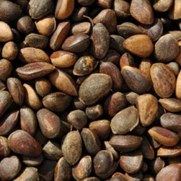 Pine Nuts 12.5kg
